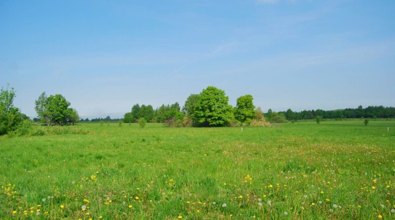 Как жители Маслянинского района могут получить земельный участок?