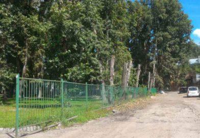 Аварийные деревья в Новосибирске убирает депутат ЛДПР